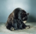 Photo ours brun Animaux