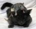 Photo chat et souris Animaux